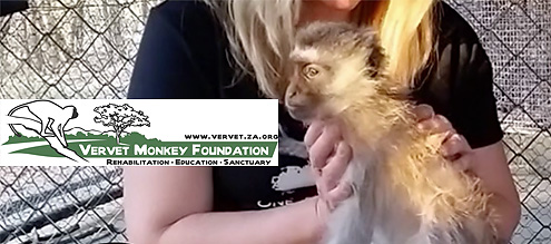 FEOA-Vervet-Monkey-Foundation