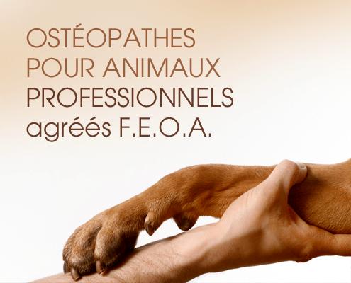 FEOA professionnels osteopathes pour animaux
