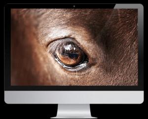 FEOA fédération européenne des ostéopathes pour animaux