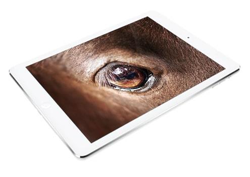 feoa-osteopathe-cheval