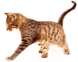 animal osteopath