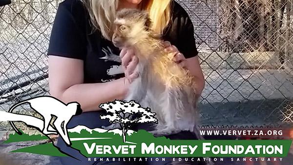 osteopathy-vervet-monkey