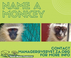 VMF-NAME-A-MONKEY