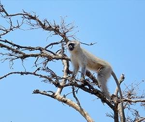 vmf-monkeys-1